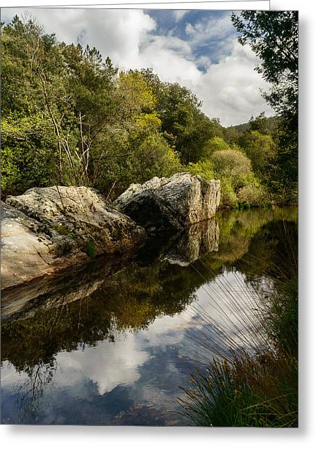 Trees Reflecting In Creek Greeting Cards - River Reflections II Greeting Card by Marco Oliveira