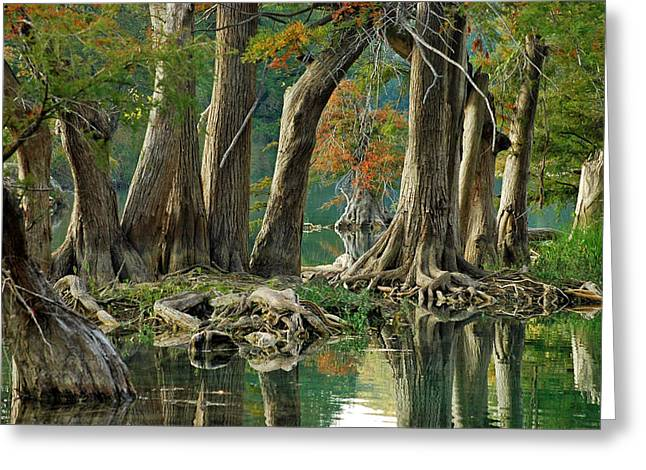 Cypress Hills Greeting Cards - River Road Cypress Greeting Card by Robert Anschutz