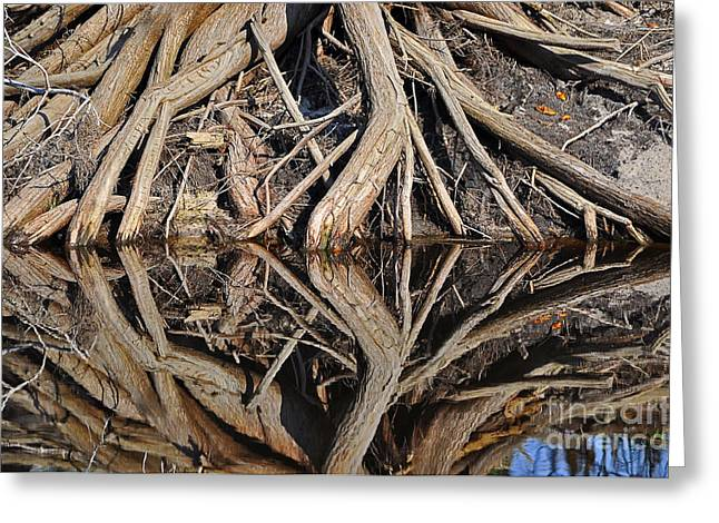 Tree Roots Greeting Cards - River Roots Greeting Card by Al Powell Photography USA