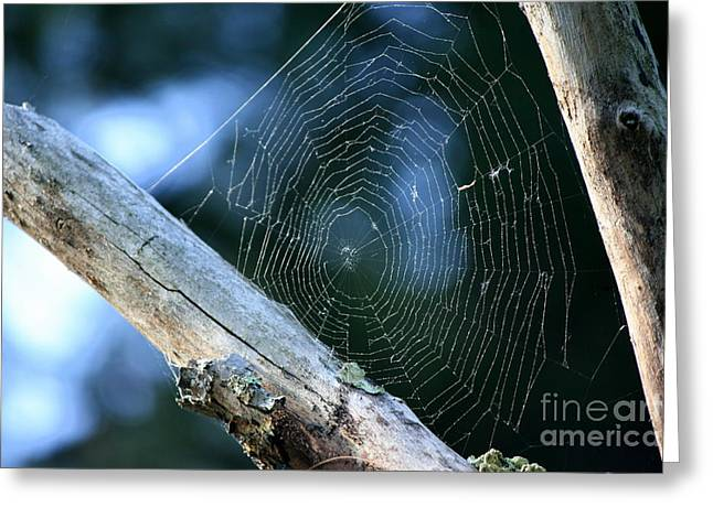 Connecticut Greeting Cards - River Spider Web   Greeting Card by Neal  Eslinger