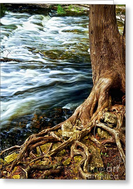 Clear Flowing Stream Greeting Cards - River through woods Greeting Card by Elena Elisseeva