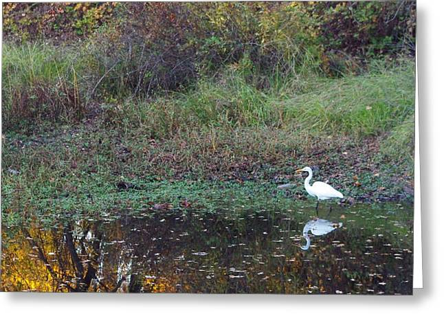 River Trail Egret Greeting Card by Michelle Fairchild