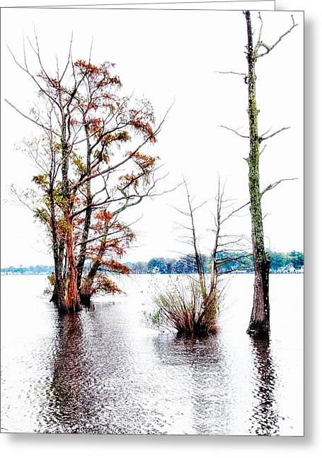 Cypress Tree Digital Art Greeting Cards - River Trees - Elizabeth City NC Greeting Card by Dan Carmichael