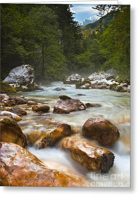Bistrica Greeting Cards - River Wading Greeting Card by Misty Bellevue