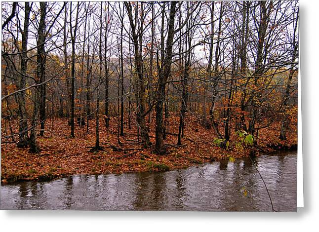 Fall Trees With Stream. Greeting Cards - Riverbank of Beauty Greeting Card by Kathleen Sartoris