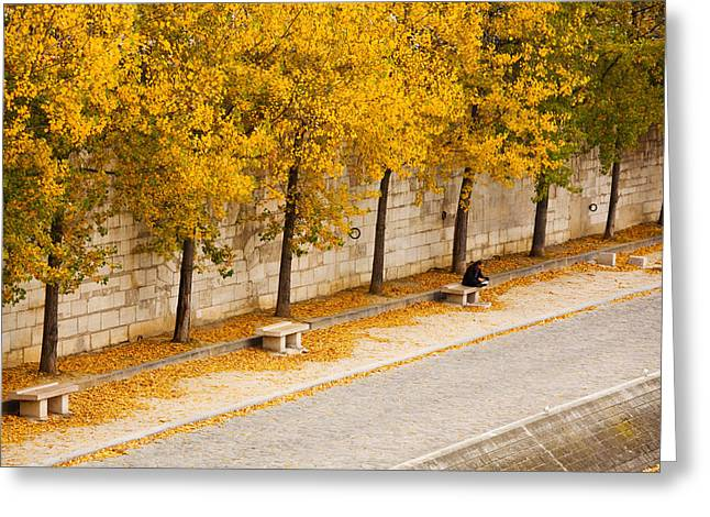 Fallen Leaf Greeting Cards - Riverfront, Ile De La Cite, Paris Greeting Card by Panoramic Images