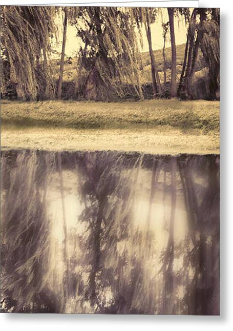 Tree Reflections Greeting Cards - Riverside Trees Greeting Card by HD Connelly