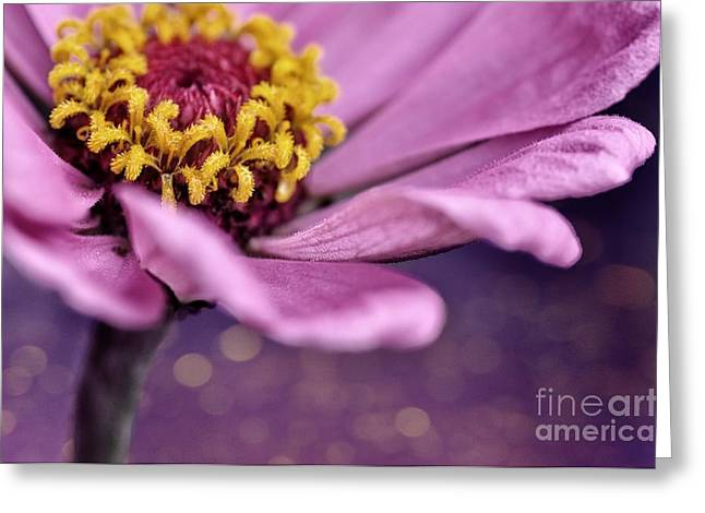 Zinnia Elegans Greeting Cards - Riverside Zinnia Greeting Card by Chris Fleming
