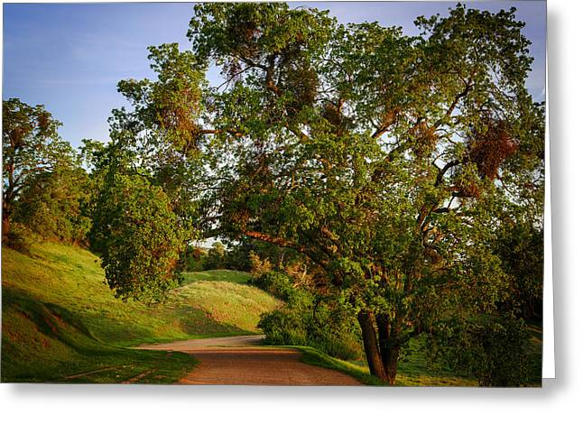 Dirt Road Greeting Cards - Road by the tree Greeting Card by Sarit Sotangkur