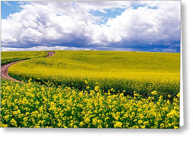 Field. Cloud Greeting Cards - Road, Canola Field, Washington State Greeting Card by Panoramic Images