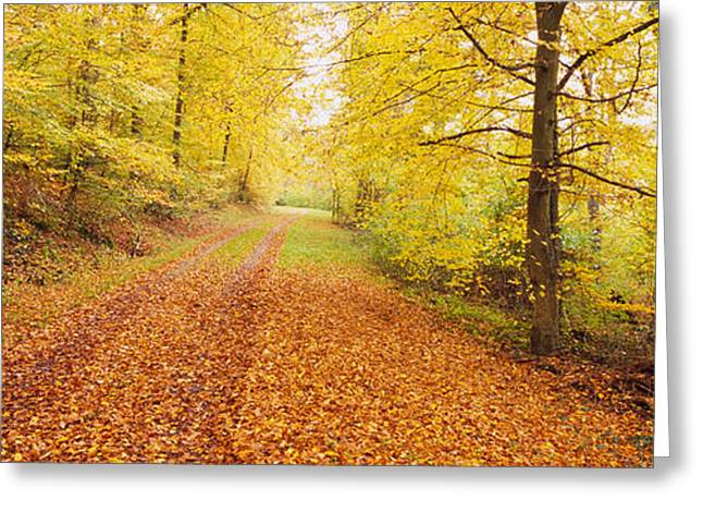 Fallen Leaf Greeting Cards - Road Covered With Autumnal Leaves Greeting Card by Panoramic Images