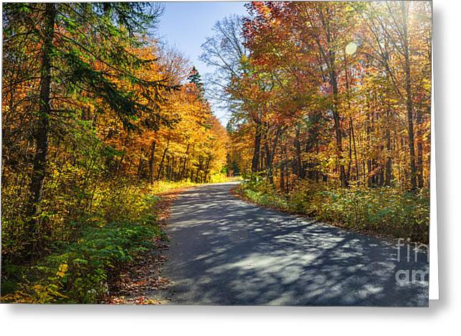 Algonquin Park Greeting Cards - Road in fall forest Greeting Card by Elena Elisseeva