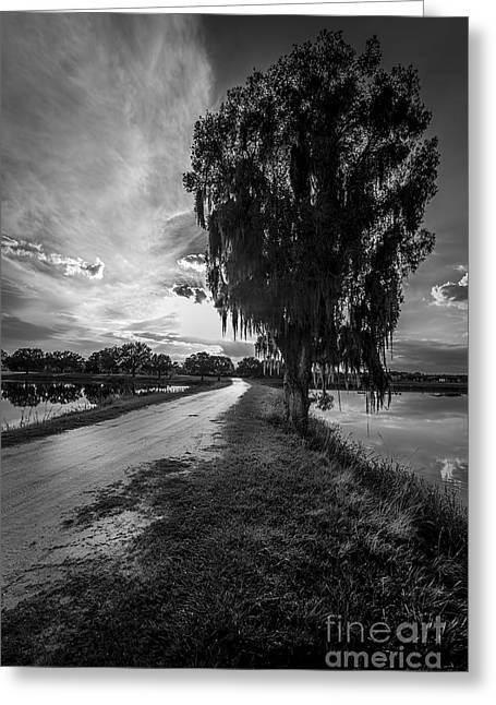 Small Trees Greeting Cards - Road Into The Light-bw Greeting Card by Marvin Spates