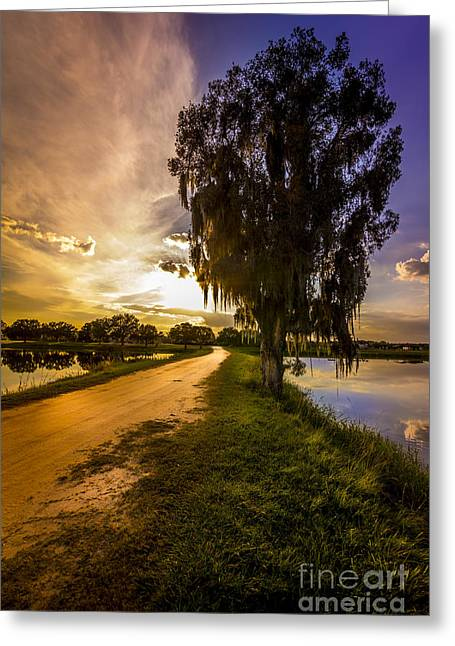 Small Trees Greeting Cards - Road Into The Light Greeting Card by Marvin Spates