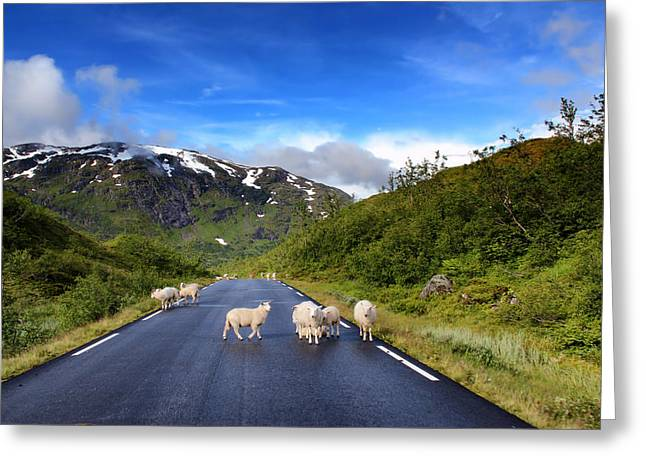 Mountain Road Greeting Cards - Road Obstacle Greeting Card by Mountain Dreams