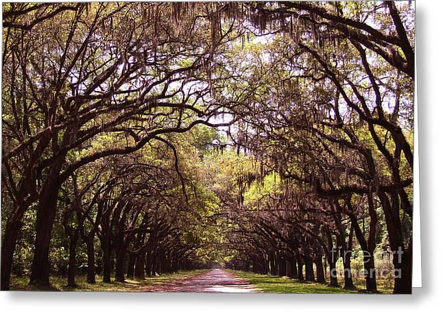 Long Street Greeting Cards - Road of trees Greeting Card by Andrea Anderegg