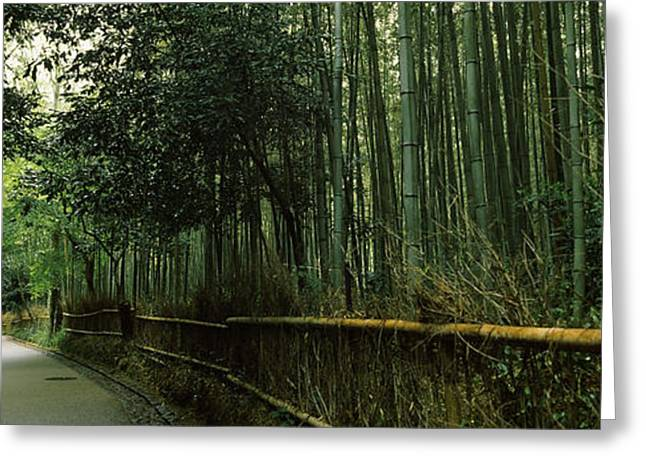Bamboo Fence Greeting Cards - Road Passing Through A Bamboo Forest Greeting Card by Panoramic Images