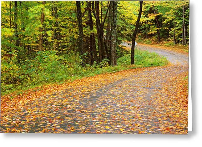 Fallen Leaf Greeting Cards - Road Passing Through A Forest, Country Greeting Card by Panoramic Images