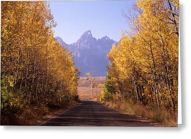 Autumn Colors Greeting Cards - Road Passing Through A Forest, Grand Greeting Card by Panoramic Images