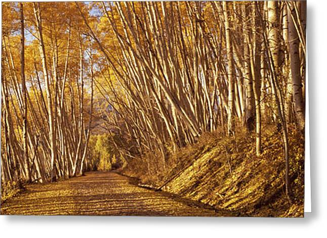 Fall Scenes Greeting Cards - Road Passing Through A Forest Greeting Card by Panoramic Images