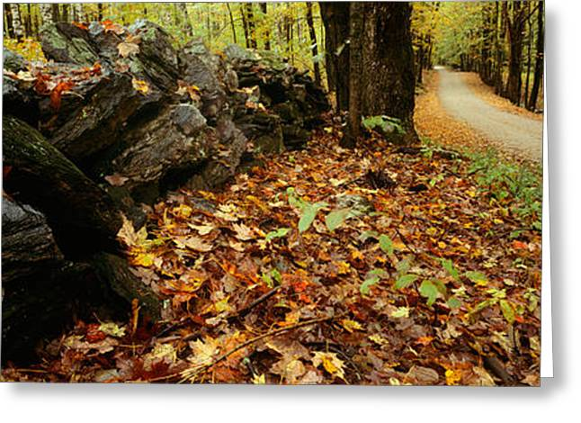 New Hampshire Leaves Greeting Cards - Road Passing Through A Forest, White Greeting Card by Panoramic Images
