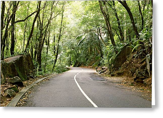 Road Marking Greeting Cards - Road Passing Through An Indigenous Greeting Card by Panoramic Images