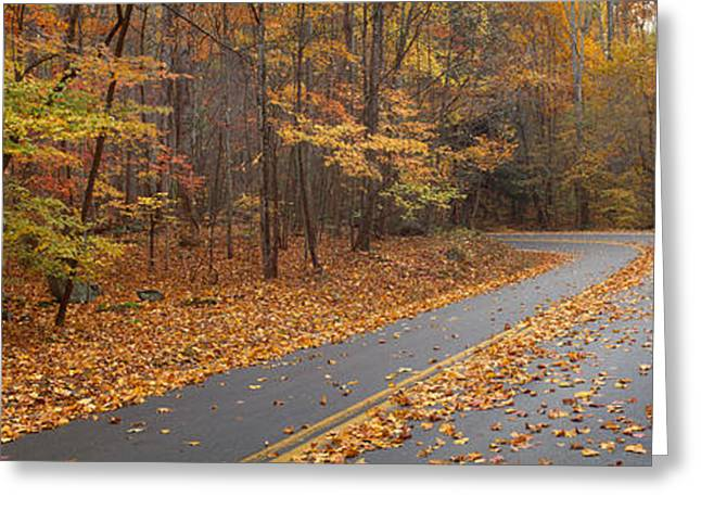 Double Yellow Line Greeting Cards - Road Passing Through Autumn Forest Greeting Card by Panoramic Images