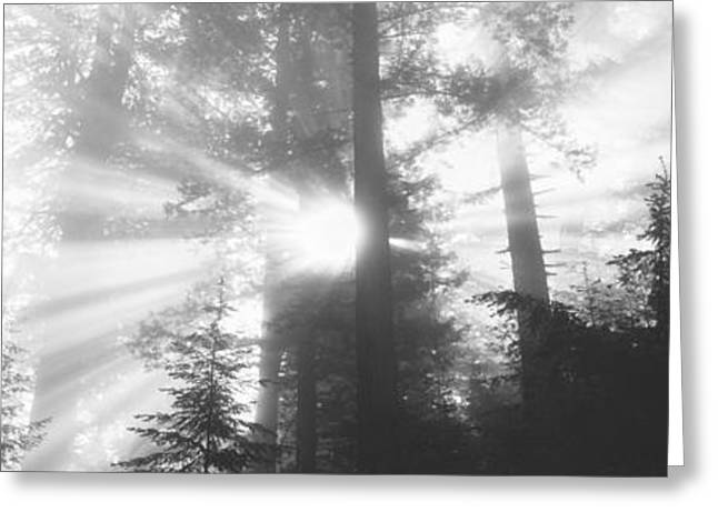 Sun Beams Sun Rays Greeting Cards - Road, Redwoods Park, California, Usa Greeting Card by Panoramic Images