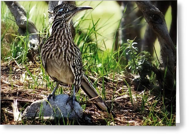 Runner Greeting Cards - Road Runner Nature Wildlife Photography Greeting Card by Ella Kaye Dickey