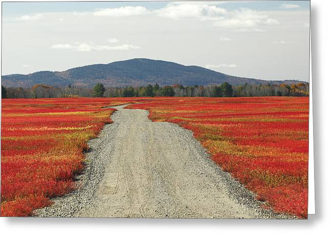 Maine Agriculture Greeting Cards - Road Through Autumn Blueberry Maine Greeting Card by Scott Leslie