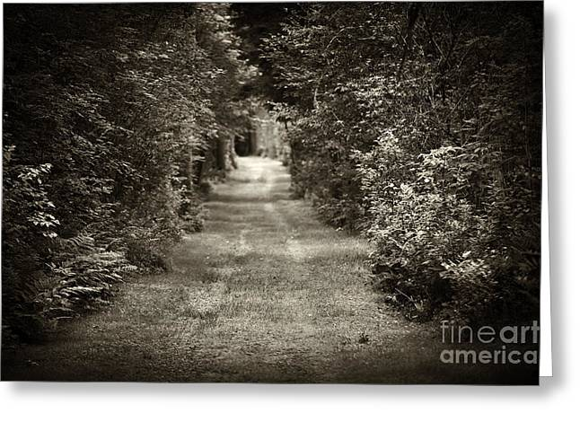 White Roads Greeting Cards - Road through forest Greeting Card by Elena Elisseeva