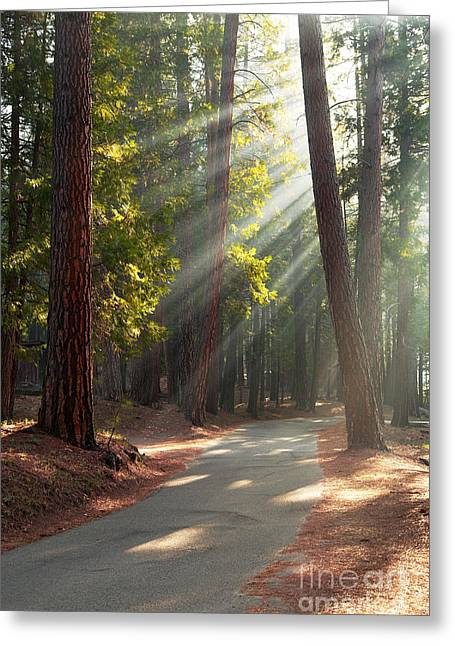 Redwood Tree Greeting Cards - Road through Mariposa Grove Greeting Card by Jane Rix