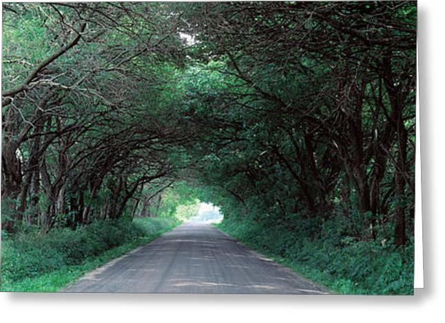 Ahead Greeting Cards - Road Through Trees Marion County Greeting Card by Panoramic Images