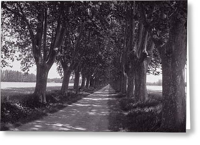 Roadway Greeting Cards - Road Through Trees, Provence, France Greeting Card by Panoramic Images