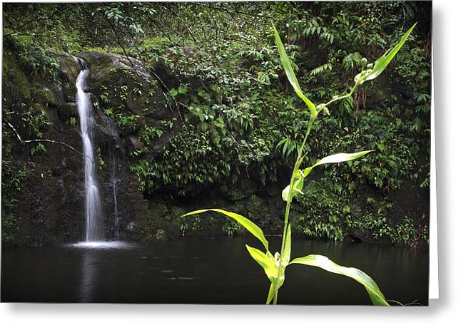 Paradise Road Greeting Cards - Road to Hana 1 Greeting Card by Jessica Velasco