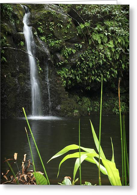 Paradise Road Greeting Cards - Road to Hana 3 Greeting Card by Jessica Velasco