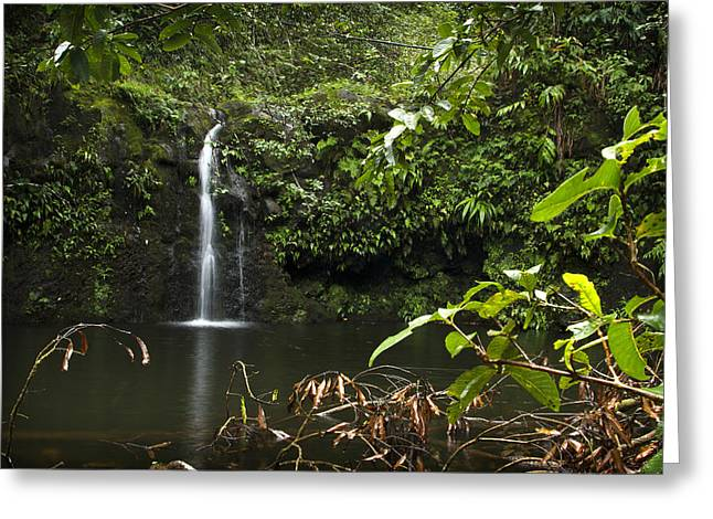 Paradise Road Greeting Cards - Road to Hana 4 Greeting Card by Jessica Velasco
