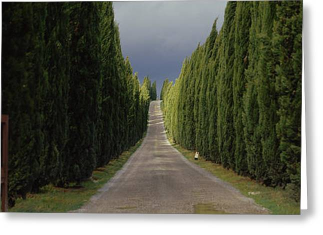 Lining Greeting Cards - Road, Tuscany, Italy Greeting Card by Panoramic Images