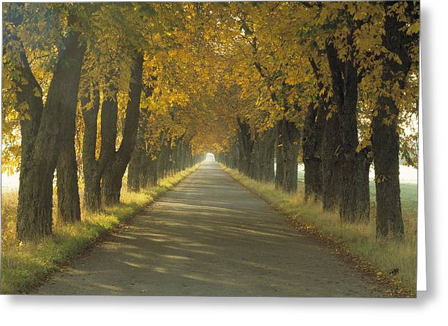 Tree Lines Greeting Cards - Road Wautumn Trees Sweden Greeting Card by Panoramic Images