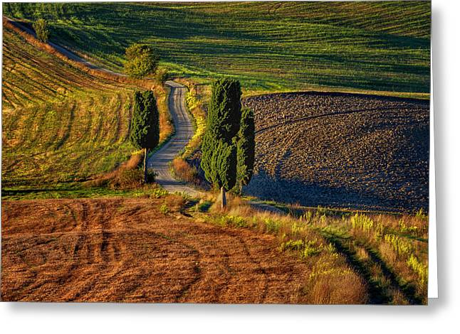 Tuscan Sunset Greeting Cards - Road with Cypresses Greeting Card by Jan Sieminski