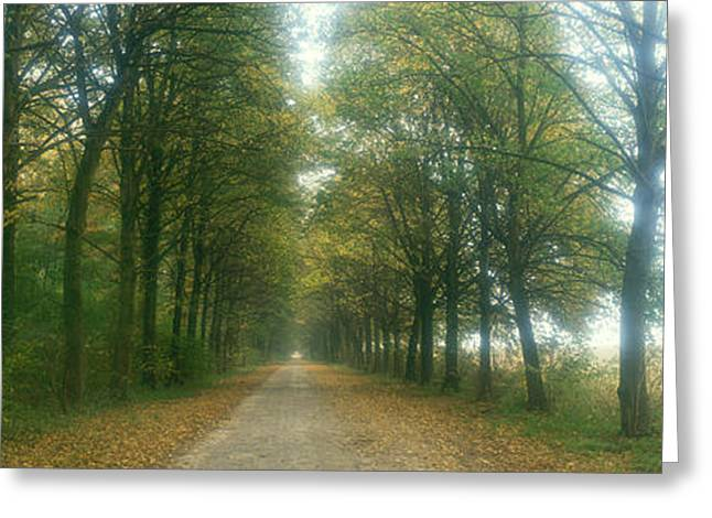 Tree Lines Greeting Cards - Road With Fog, France Greeting Card by Panoramic Images