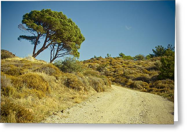 Lesvos Greeting Cards - Road with Olive trees Greeting Card by Raimond Klavins