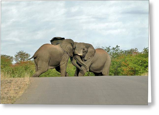 Roadblock Greeting Cards - Roadblock Greeting Card by William Morgan
