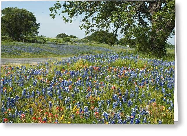 Robert Anschutz Greeting Cards - Roadside Color Greeting Card by Robert Anschutz