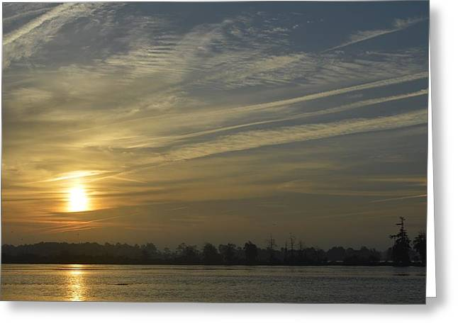 Calcasieu River Greeting Cards - Roadside Greeting Card by Eileen Corbel