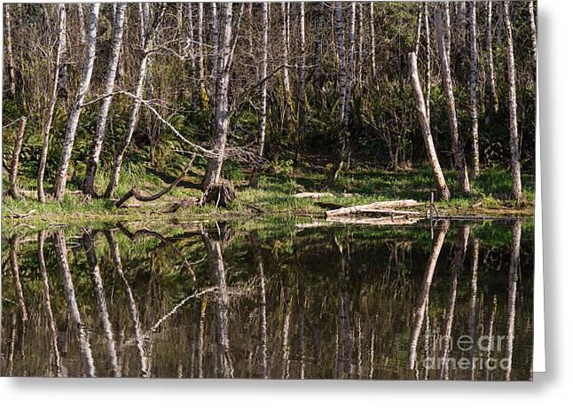 Ocean Images Greeting Cards - Siuslaw Forest 1 Greeting Card by Tracy Knauer
