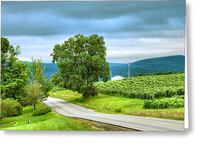 Vineyard Prints Greeting Cards - Roadside Vineyard Greeting Card by Steven Ainsworth