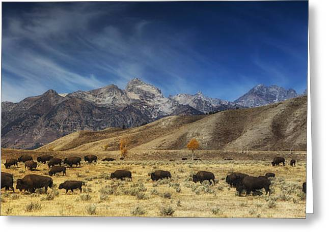 Mark Kiver Greeting Cards - Roaming Bison Greeting Card by Mark Kiver