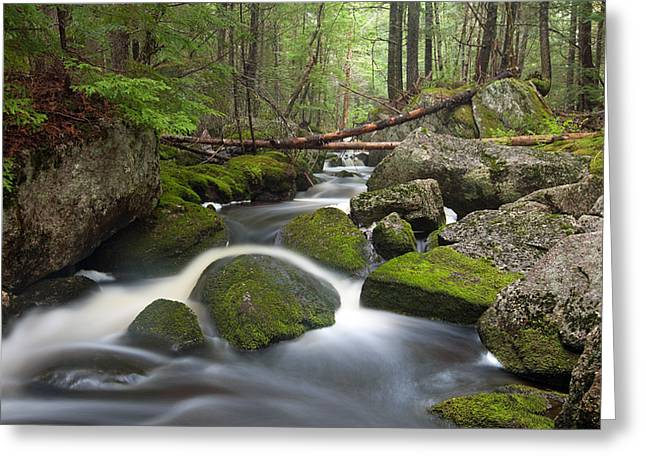 Maine Landscape Greeting Cards - Roaring Brook Greeting Card by Patrick Downey