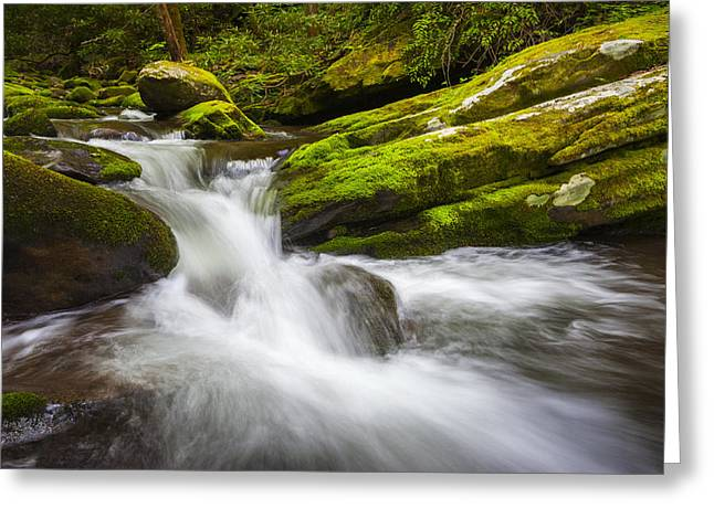 Gatlinburg Tennessee Greeting Cards - Roaring Fork Great Smoky Mountains National Park Cascade - Gatlinburg TN Greeting Card by Dave Allen